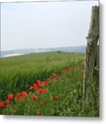 England Sussex Poppy Field Metal Print