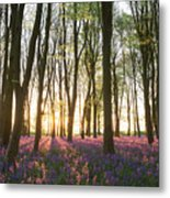 English Bluebell Wood Metal Print