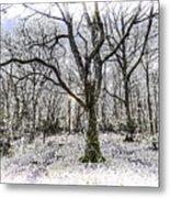 English Forest Snow Art Metal Print