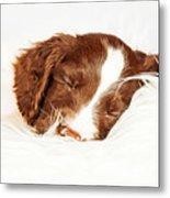 English Springer Spaniel Puppy Sleeping On Fur Metal Print
