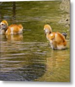 Enjoying The Water 2 Metal Print
