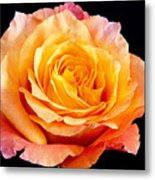 Enticing Beauty The Orange  Rose Metal Print