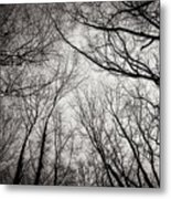 Entwined In The Sky Metal Print