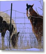 Equestrian Beauties Metal Print