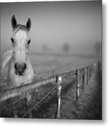 Equine Fog Metal Print by Taken with passion