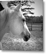 Equine Profile Metal Print