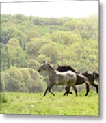 Equines For Freedom Metal Print