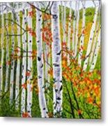 Erin's Birch Trees Metal Print