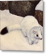 Ermine In Winter Metal Print