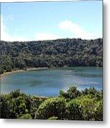 Escalonia Cloud Forest Trail Metal Print