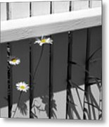 Escapees Metal Print