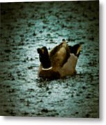 Escaping The Rain Metal Print