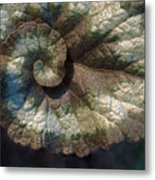 Escargot Begonia Metal Print