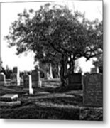 Etched In Stone Metal Print by Donna Blackhall