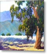 Eucalyptus On The Bluffs Metal Print