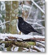 Eurasian Blackbird In The Snow Metal Print