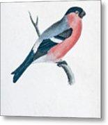 Eurasian Bullfinch Artwork Metal Print