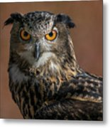 Eurasian Eagle Owl Iv Metal Print