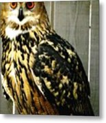 Eurasian Eagle-owl With Oil Painting Effect Metal Print