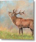 European Red Deer Metal Print