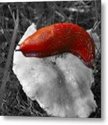 European Red Slug - Arion Rufus Metal Print