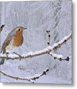 European Robin On Snowy Branch Metal Print