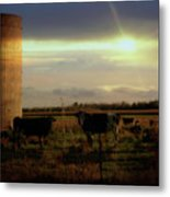 Evening Cows Metal Print