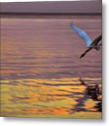 Evening Flight Metal Print