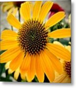 Evening Flower Metal Print