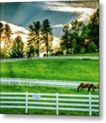 Evening Graze In Tennessee Metal Print