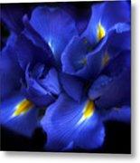 Evening Iris Metal Print