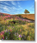 Evening Light At North Table Mountain Metal Print