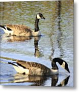 Evening Light On Nature Metal Print