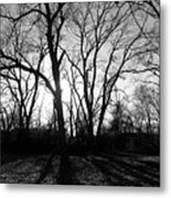 Evening Sun Through The Trees Metal Print