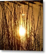 Evening Sunset Over Water Metal Print