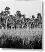 Everglades Grasses And Palm Trees 2 Metal Print