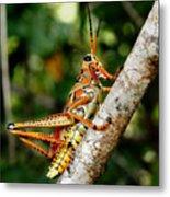 Everglades Grasshopper Metal Print