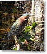 Everglades Inhabitant Metal Print