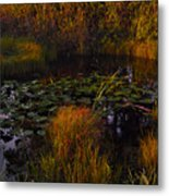 Everglades Pond Metal Print