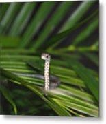 Everglades Racer Metal Print