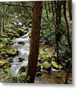 Evergreen Stream Ravine Metal Print