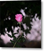 Every Rose Has Its Thorn Metal Print
