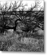 Every Which Way But Loose Metal Print
