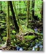 Evolution Of A Forest In Spring  Metal Print
