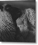 Ewe Talk A Metal Print