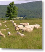 Ewe's Eye View Metal Print