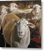 Ewes In The Paddock Metal Print