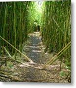 Exlporing Maui's Bamboo Metal Print