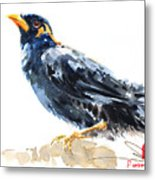 Myna Bird From Thailand Metal Print