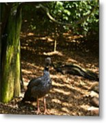 Exotic Bird 2 Metal Print